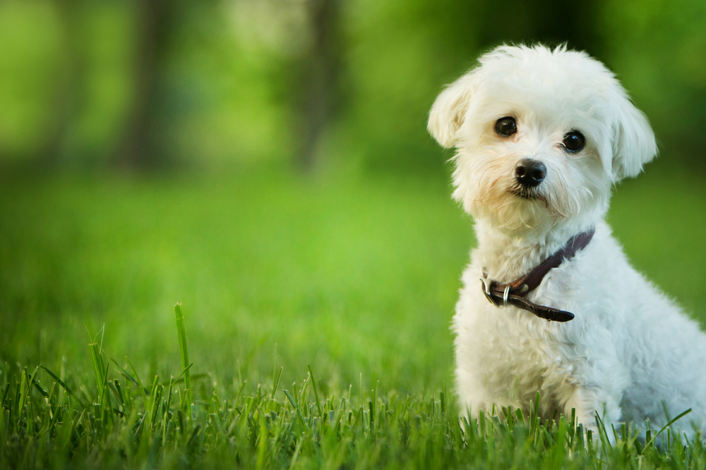 small-dog-breeds ˘ٚɘ әޘљșXǛ̙ ęțؙ̚ ǘ̘ٛ ϙƙȘљȘ